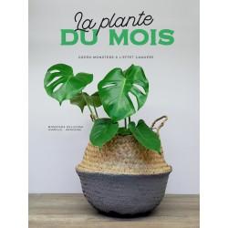La plante du mois - La Monstera Deliciosa