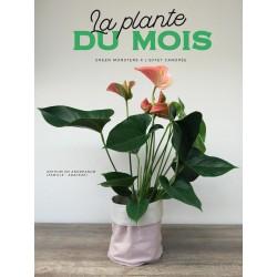 La plante du mois - L'Anthurium