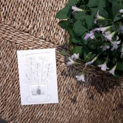 Carte à graines basilic