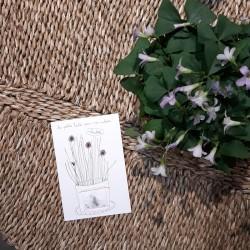 Cartes à graines Ciboulette