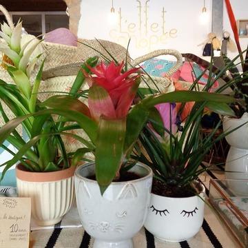 Comme vous devez commencer à le savoir, ce vendredi 24, L'effet canopée, boutique du 1er, fêtera ses 5 ans !! Pour l'occasion je vous ai préparé un joli concours pour vous gâter avec des marques et créateurs que vous aimez beaucoup ! Vous saurez tout vendredi ! Pour patienter, voila une nouvelle surprise ! Des plantes très colorées, qui changent de celles qu'on vous propose habituellement, de la famille des broméliacées, ont été livrées par @greenmnstrs ce matin à L'effet canopée ! Elles sont au prix rond de 10 euros et sont si jolies installées par Marion sur notre table centrale, je parie qu'elles ne resteront pas longtemps ! . . . Broméliacées disponibles uniquement à L'effet canopée pour ses 5 ans 🎉