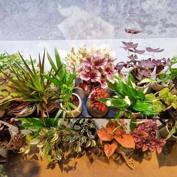 Que j'aime le beau mélange des couleurs, formes et textures des plantes sur ce petit banc dans le green corner du Bruit du bonheur ! Jamais le même, jour après jour, après vos achats et les réapprovisionnements ! Un plaisir à